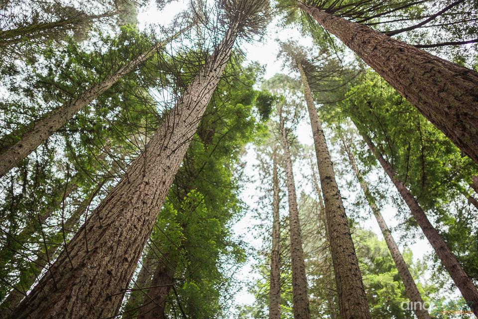hoyt arboretum trees