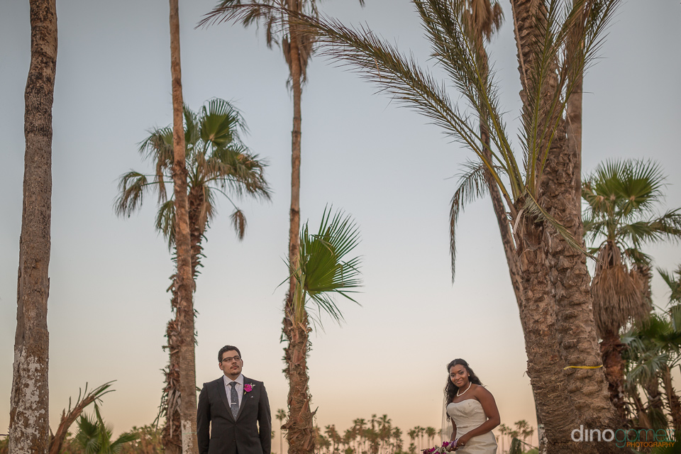 photo of bride and groom and palms - Wedding Photographer in Mex