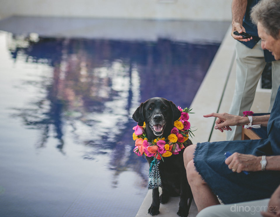 dog with roses around its collar at wedding in cabo san lucas me