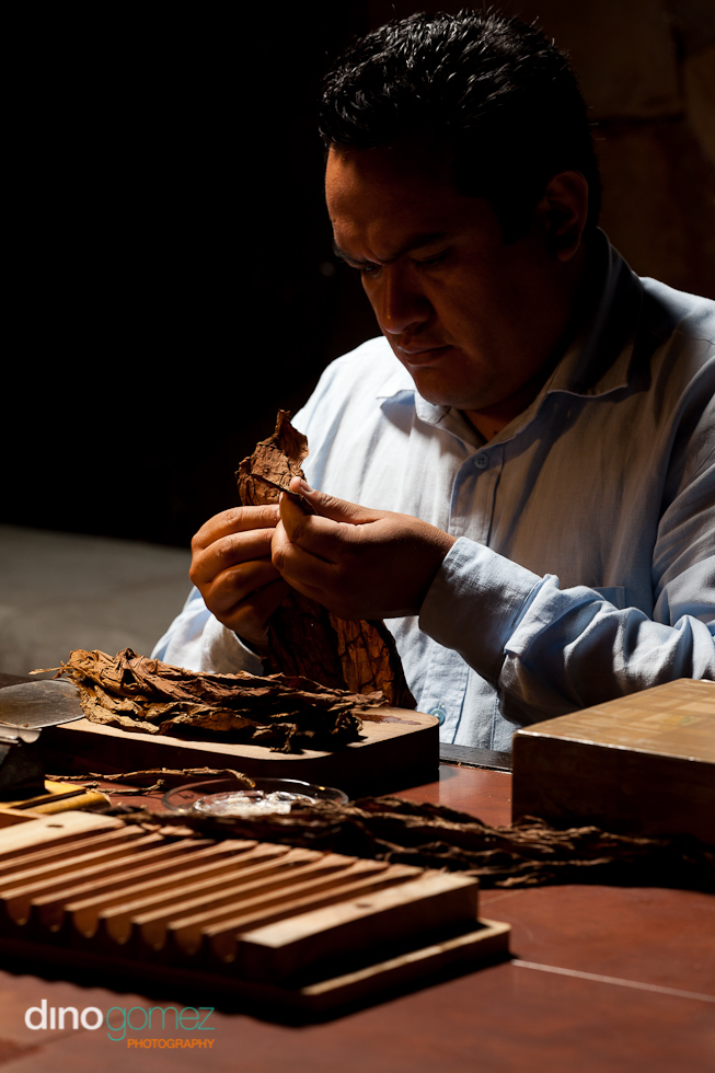 Man sorting tobacco for cigars
